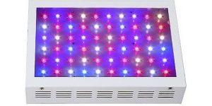 LED taimelambid