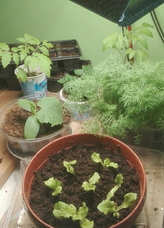 Taimed sirguvad