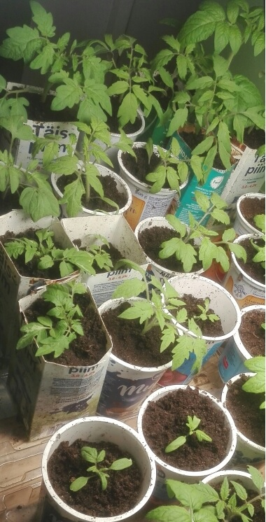 Taimed kasvavad
